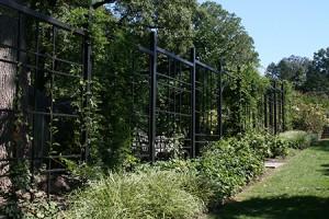 M18– Morris Arboretum of the University of Pennsylvania