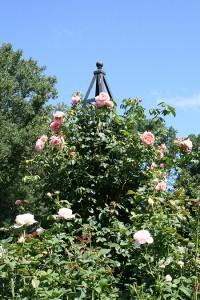 M15– Morris Arboretum of the University of Pennsylvania